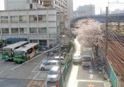 tobasu-sakura060328