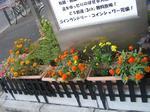 Hikari_2