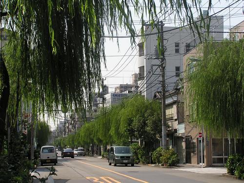 今吉柳通り